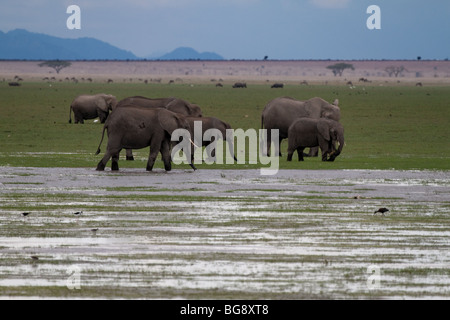 Elephants in  National park Amboseli in Kenya - Stock Photo