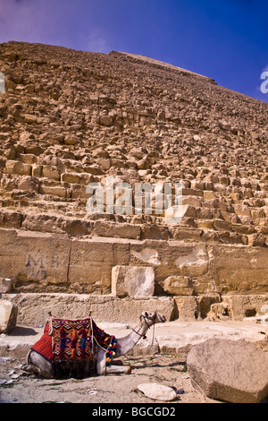 For a price you can pose with a camel in front of one of the great Pyramids of Giza near Cairo  Egypt - Stock Photo