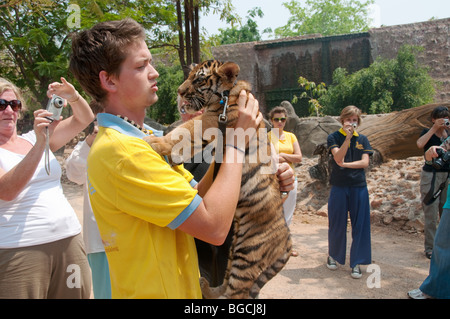 a caretaker from the UK carrying a tiger cub at the tiger temple in Kanchanaburi, thailand - Stock Photo