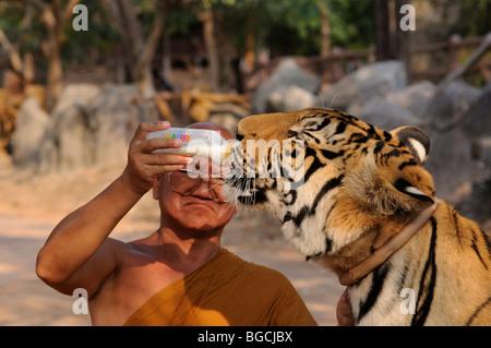 Thailand; Kanchanaburi; Monk giving milk to a tiger cub at the Tiger Temple - Stock Photo
