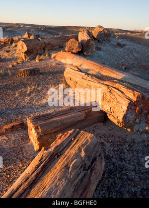 Whole and broken petrified logs at Petrified Forest National Park in Arizona, USA. - Stock Photo