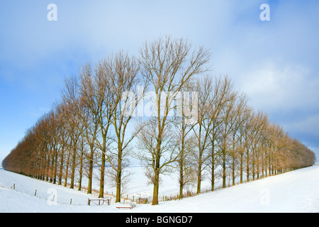 Composition with trees in the Johannes Kerkhovenpolder near Woldendorp, province Groningen, Netherlands - Stock Photo
