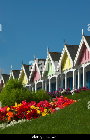 Some colourful beach huts along the esplanade in Weymouth, Dorset, with summer bedding UK September 2008 - Stock Photo