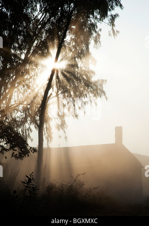 Sunburst through trees above a barn in India. Silhouette - Stock Photo