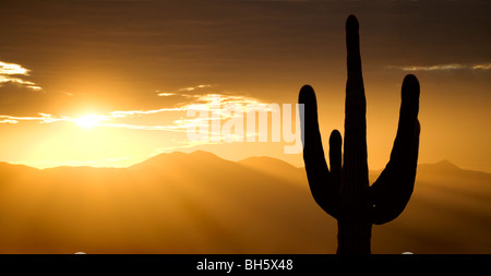 Mountain sunset with a saguaro cactus silhouetted against the sky. This one is in Arizona, just west of Tucson. - Stock Photo
