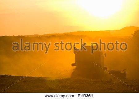 Sun over combine harvesting wheat in rural field - Stock Photo