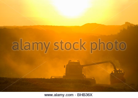 Sun over combine harvesting wheat and filling trailer in rural field - Stock Photo