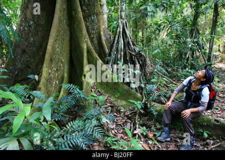 Girl and big Silk cotton tree at Cerro Pirre in the Darien national park, Republic of Panama. - Stock Photo