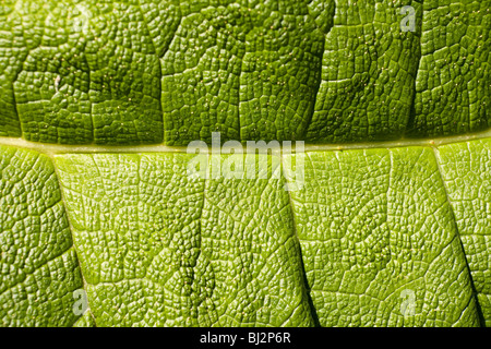 Leaf macro detail - Stock Photo