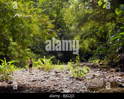 Girl walking along dry river bed in Caribbean tropical rainforest amongst lush greenery and high growing trees and - Stock Photo
