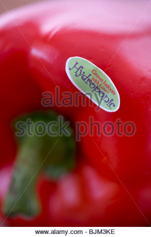 Hydroponic Grown Sticker on a Red Bell Pepper; Close Up - Stockfoto