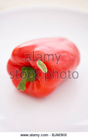 Hydroponic Grown Red Bell Pepper on a White Background - Stockfoto