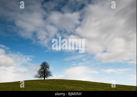 Winter Horse Chestnut Tree in the English countryside - Stock Photo