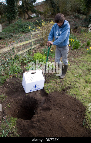 Model released teenage boy digging hole in garden to bury pet cat - Stock Photo