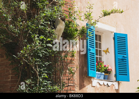 Side Of A Building With Blue Shutters - Stock Photo