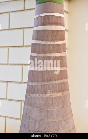 Palm trunk with horizontal lines wall in the backgroud Rodney Bay St. Lucia Windward Islands West Indies Caribbean - Stock Photo