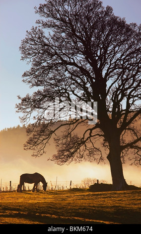 Northumberland, England; A Horse Grazing In A Field - Stockfoto