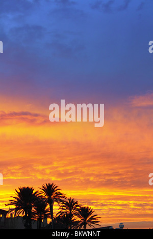 blue and orange red sunset with washingronia palm trees sunrise - Stock Photo
