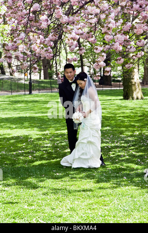 demure Chinese bride takes her groom's hand as they pose under clusters of blooming cherry blossoms in central Park - Stock Photo