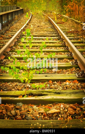 Old Berlin S-Bahn rail line, unused since the 80s - Stock Photo