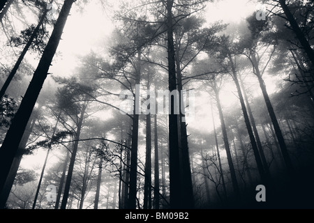 In the fog and the rain in the Yellow Mountains of Huangshan, China - Stock Photo