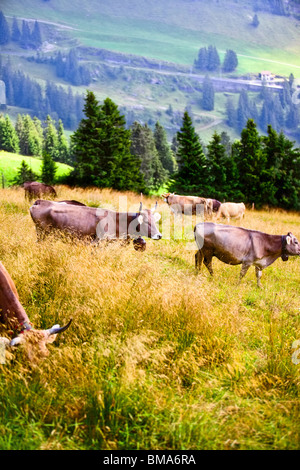 Alps landscape with cows on a field. - Stock Photo