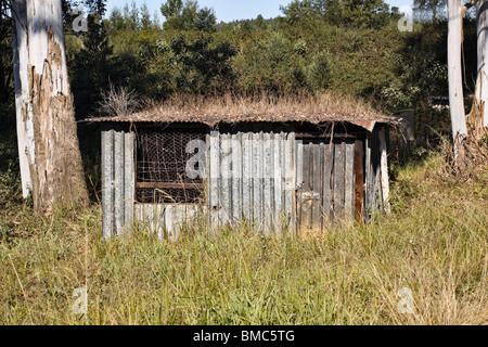 Wellpappe Blechhütte in ländlicher Umgebung. Midlands, KwaZulu Natal, Südafrika. - Stockfoto
