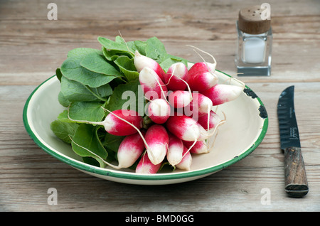 A Bunch Of Fresh French Breakfast Radish In A Enamel Dish, With A Knife and Salt Pot On A Wooden Kitchen Table - Stock Photo