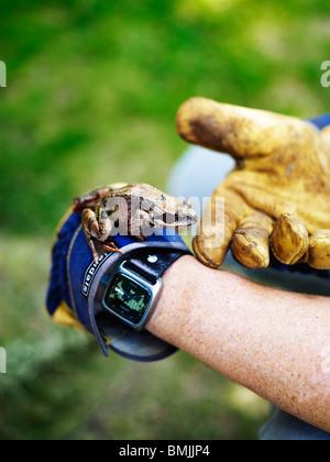 Scandinavia, Sweden, Frog on human hand, close-up - Stock Photo