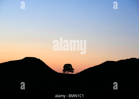 Sycamore Gap, Northumberland, England, UK - Stock Photo