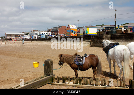Ponies waiting on a deserted sandy beach at Hunstanton Norfolk - Stockfoto