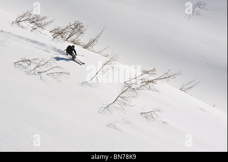 A backcountry skier starts a descent between alders in Turnagain Pass, Alaska - Stock Photo