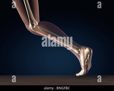 X-ray view of a human's leg in running position - Stock Photo