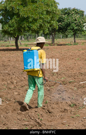 A man from a village in Damango district, Ghana. He is spraying the ground to destroy weeds in preparation for the - Stock Photo