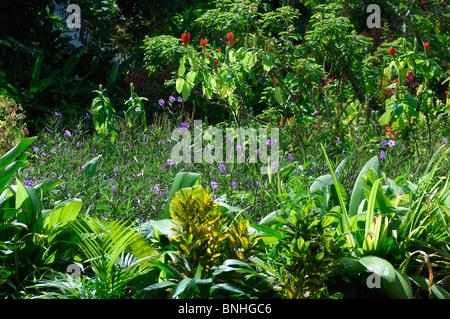 Caribbean Port Antonio Jamaica Garden Mockingbird Hill Hotel North Coast Green Flowers Flowering Plants Tropics - Stock Photo