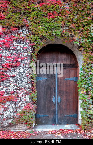 Door will fall colored ivy. Grgich Hills Estate. Napa Valley, California - Stock Photo