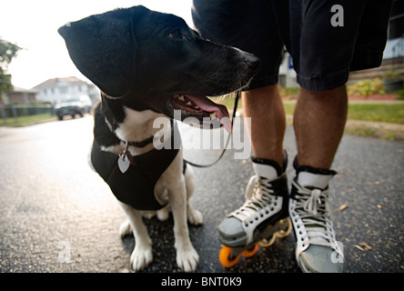 Tired looking dog standing beside man with roller skates. - Stockfoto