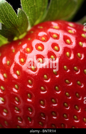 Close-up detail of a fresh red strawberry with leaves - Stock Photo