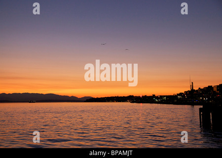 Twilight over Puget Sound two seagulls flying. Seattle, Washington. - Stock Photo