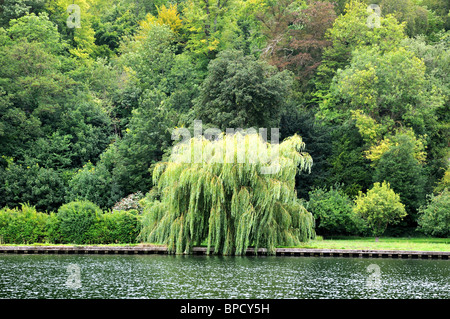 singles in weeping water Hire the best tree services in weeping water, ne on homeadvisor we have 55 homeowner reviews of top weeping water tree.