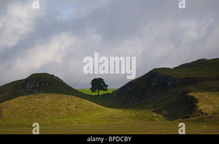Sycamore Gap, Steel Rigg, Hadrian's Wall, Northumberland National Park, England UK - Stock Photo