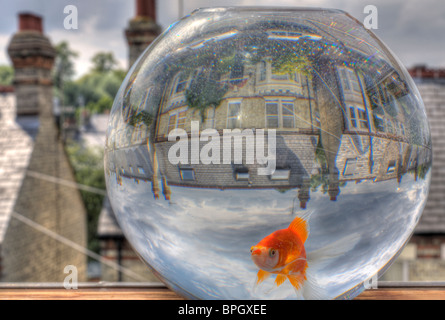 HDR image of a goldfish in a goldfish bowl, overlooking the back streets of Cambridge. - Stockfoto