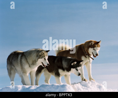 MAX EIGHT BELOW; ANTARCTICA (2006 Stock Photo, Royalty ...