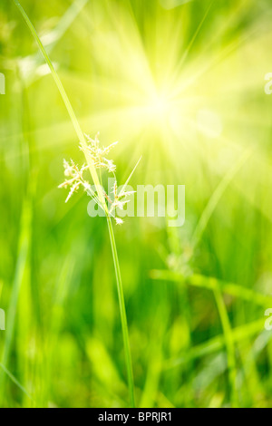 Green grass - shallow depth of field - Stock Photo