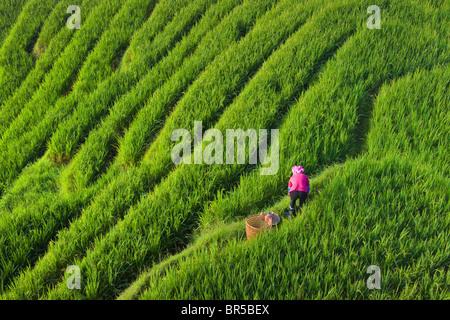 Zhuang girl with rice terraces in the mountain, Longsheng, Guangxi Province, China - Stock Photo