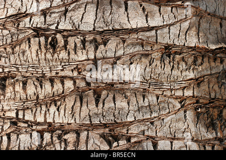 Patterns in the bark of a palm tree - Stock Photo
