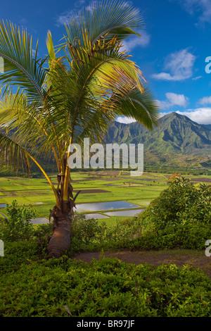 Kauai, HI View of Hanalei Valley taro fields and central mountains in morning sun, Hanalei National Wildlife Refuge - Stockfoto