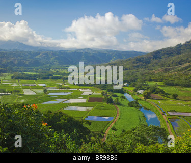 Kauai, HI View of Hanalei Valley taro fields and central mountains in morning sun, Hanalei National Wildlife Refuge - Stock Photo