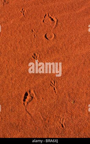 Footprints Shoes Australia