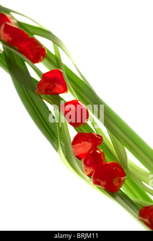 Pomegranate seeds arranged on blades of wheatgrass - Stock Photo
